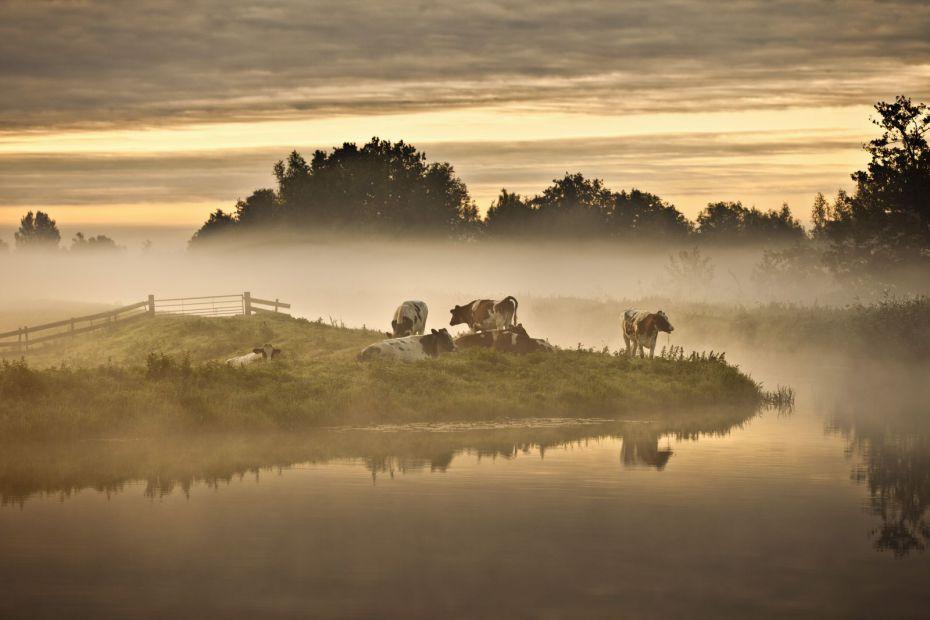 Een afbeelding van Holland Natuur in de Delta